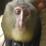 new species -monkey