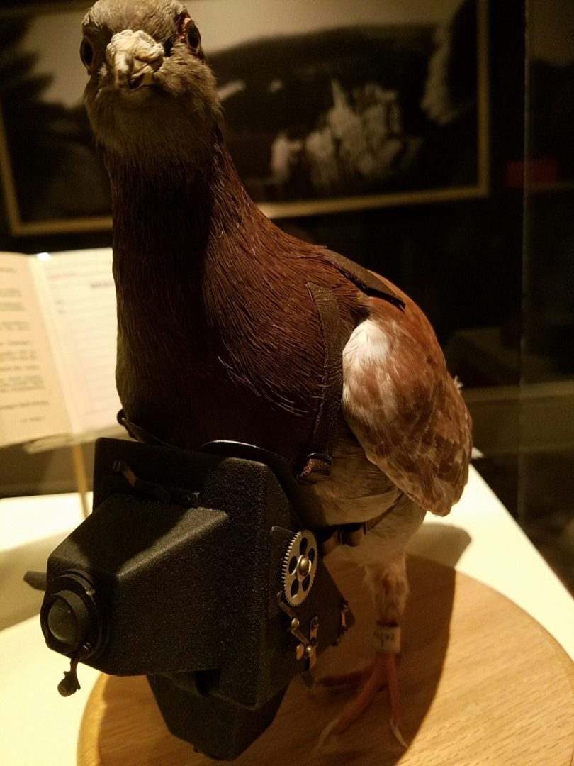 spy museum - pigeon2